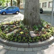 Baumring in der Schulstraße
